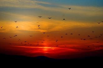 Hogyan védekezzünk a madarakkal szemben?
